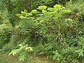 Hills-north-of-Muyu-walnut-tree-5474.jpg
