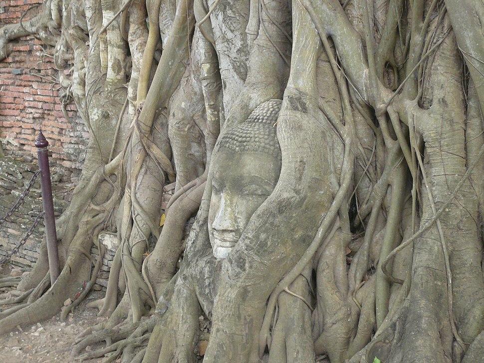 Historic City of Ayutthaya-111233