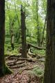 Hoher Vogelsberg Taufstein coarse woody debris.png
