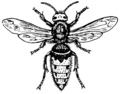Hornet (PSF).png
