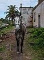 Horse at Church of Nossa Senhora da Ajuda (Pedro Miguel), Faial Island, Azores, Portugal (PPL3-Altered) julesvernex2.jpg