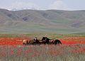 Horses in Kazakhstan.jpg