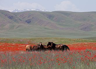 Steppe Route - Image: Horses in Kazakhstan