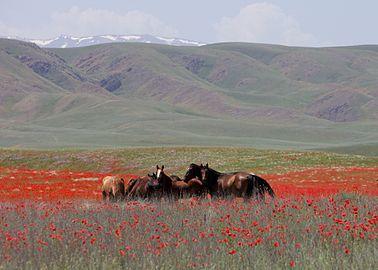 La Gestion du Carbone dans les Écosystèmes Naturels  dans Nature 378px-Horses_in_Kazakhstan