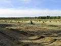 Huta-Mezhyhirska forest nursery1.JPG