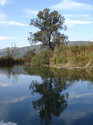 Hutovo Blato - Krupa river within Hutovo Blato Nature Park, Bosnia and Herzegovina.