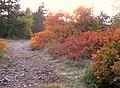 I colori del Carso - panoramio.jpg