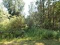 Il bosco e la palude della riserva.jpg