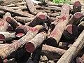 Illegal rosewood stockpiles 001.JPG