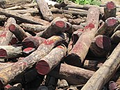 A close-up photo of an unorganized pile of dozens of rosewood logs