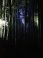 Illuminated Sagano bamboo forest 17.jpg