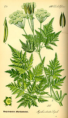 Illustration Myrrhis odorata0.jpg