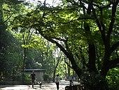 Inokashira Park 02.jpg
