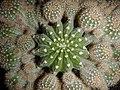 "Iran-qom-Cactus-The greenhouse of the thorn world گلخانه کاکتوس ""دنیای خار"" در روستای مبارک آباد قم- ایران 42.jpg"