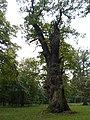 Ivenacker Eichen, Tiergarten in der Gemeinde Ivenack 1.JPG