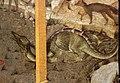 Jacopo bellini, san girolamo nel deserto, dalla coll. pompei, vr 11 drago.JPG