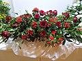 Japanese Festival in Vigadó. Barbiere Royal flower arrangement. Red. - Budapest.JPG