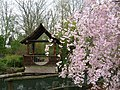Japanese Garden at Ogden Gardens - panoramio.jpg