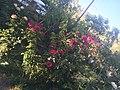 Jardin de fleur.jpg