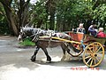 Jaunting Car in Killarney - panoramio.jpg