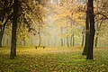 Jesen u Košutnjaku Autumn in Košutnjak.jpg