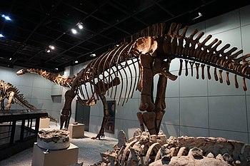 Jiangshanosaurus lixianensis zmnh006.JPG
