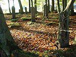 Jüdischer Friedhof Borger