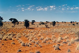 Kalahari Desert - Kalahari in Namibia