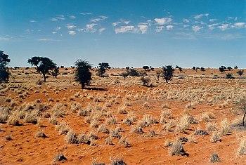 Kalahari in Namibia