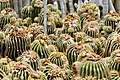 Kalimpong Flora and Fauna2.jpg