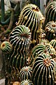 Kalimpong Flora and Fauna7.jpg