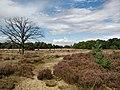 Kalmthoutse Heide 3.jpg