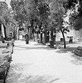 Kapernaum. Monnik wandelend over een pad temidden van archeologische vondsten, Bestanddeelnr 255-3007.jpg