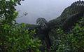Karori Tree Ferns - Flickr - Teacher Traveler (1).jpg