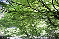 Kasugai 20210426-092.jpg