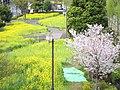 Kiba park , Koto ward - panoramio (3).jpg