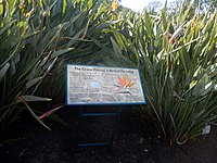 Kirstenbosch National Botanical Garden by ArmAg (33).jpg