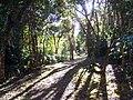 Koke'e State Park (351500873).jpg