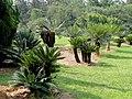 Kunming Botanical Garden - DSC02720.JPG