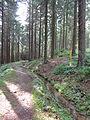 Kunstgraben des Oberharzer Wasserregals oberhalb von Festenburg 02.JPG