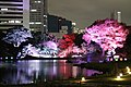 Kyu Shiba-rikyu Gardens 20181124-7.jpg
