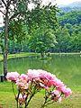 Lago Verde 4.jpg