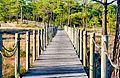 Lagoa da Ervedeira Patrimonio Natural 03.jpg
