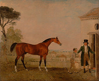 Sultan (horse) - Sultan at the Marquess of Exeter's Stud, Burghley House