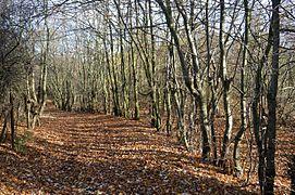 Landschaftsschutzgebiet Rottsberghang - Mittlerer Teil (14).JPG