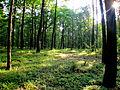 Lasy kozłowieckie.JPG
