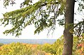 Ledges at Cuyahoga Valley National Park (10544169514).jpg