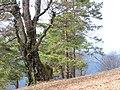 Letitý pamätník - panoramio.jpg