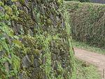 Lichens on a wall (28917980091).jpg