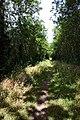 Line Walk, Little Whelnetham - geograph.org.uk - 199328.jpg